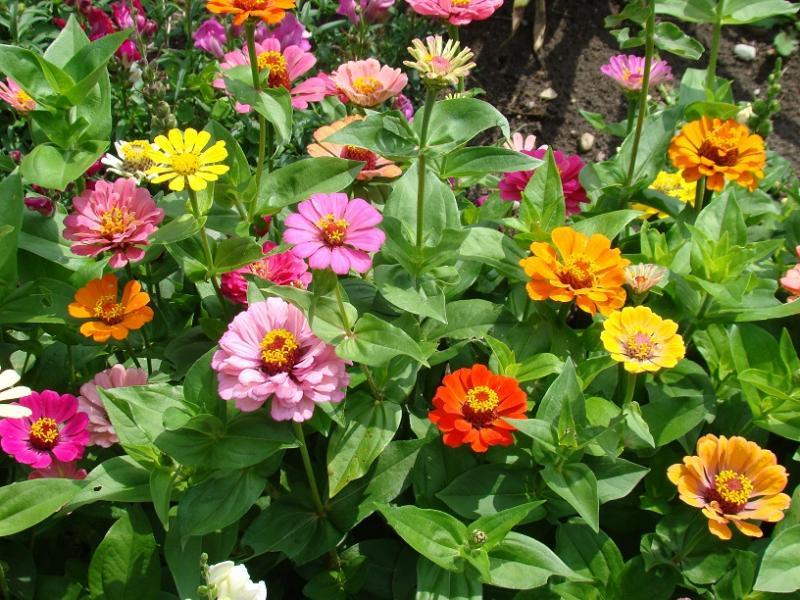 24ef04ccdaacec Uprawiamy kwiaty z nasion, Kraj - Express-Miejski.pl - Informacje i  wiadomości z regionu